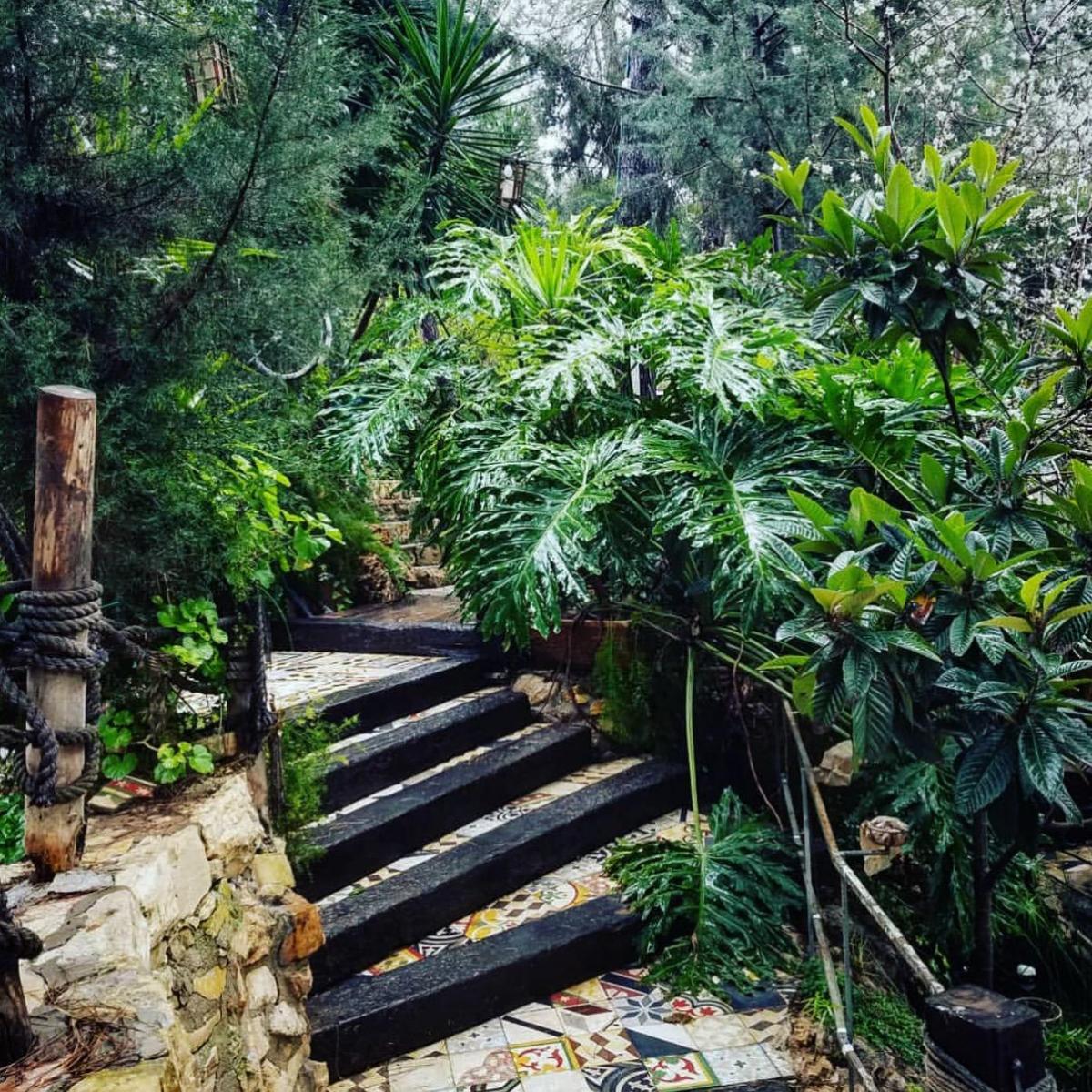 jungle9